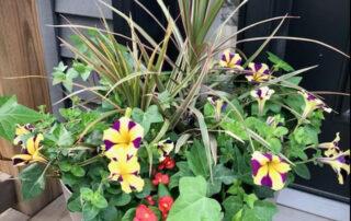 Collingwood Blue Mountains seasonal planter subscriptions autumn