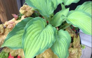 Collingwood Blue Mountains seasonal planter subscriptions winter